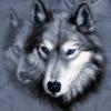 Rekrutacja do Support Team - last post by StarsWoman